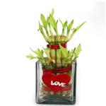 Love Plant Gift